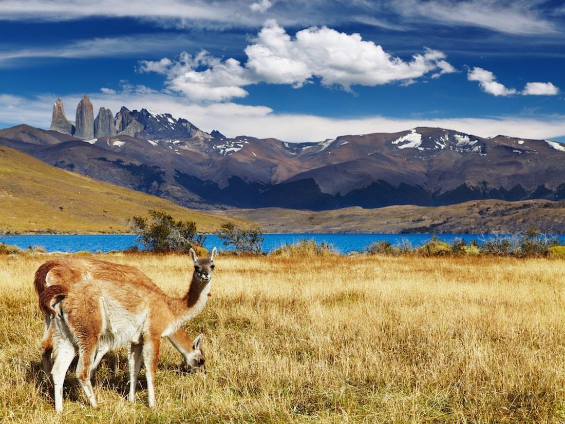 La bataille des champs patagoniques(I)