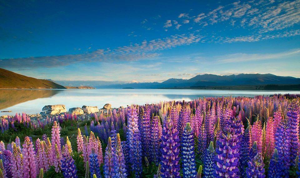 Apocalypse : pourquoi la Nouvelle-Zélande fascine WallStreet