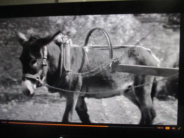 Au hasard Balthazar. Un âne tourne en rond et il affronte la modernisation de la France rurale, au milieu des années soixante. C'est l'apocalypse. Film de Robert Bresson(1966).