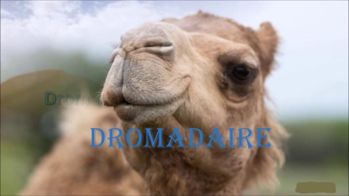 Nicolas Bonnal bosse beaucoup pour vous, ne soyez pas chameau, achetez-le!