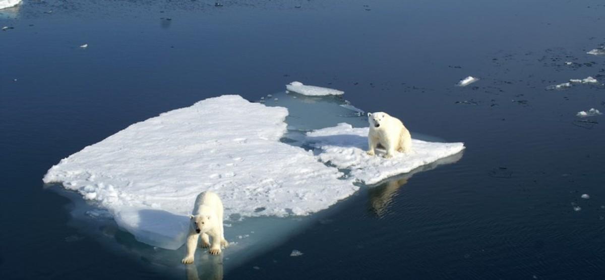Réchauffement climatique : les ours blancs à l'Arctique de la mort ? En prime, un conte monégasque : le secret de l'ourspolaire…