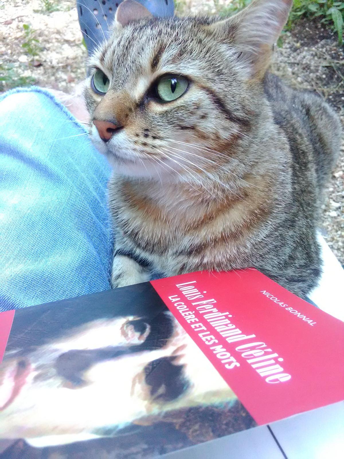 Mon chat est un médium, la preuve par Le Vigan!