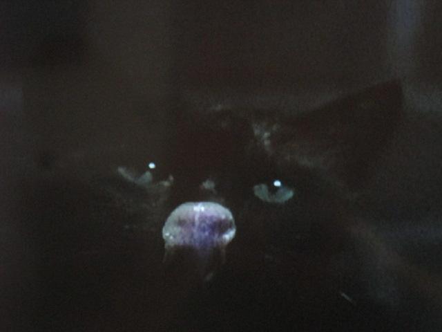 Notre chat préféré lit Céline avec le NicolasBonnal…