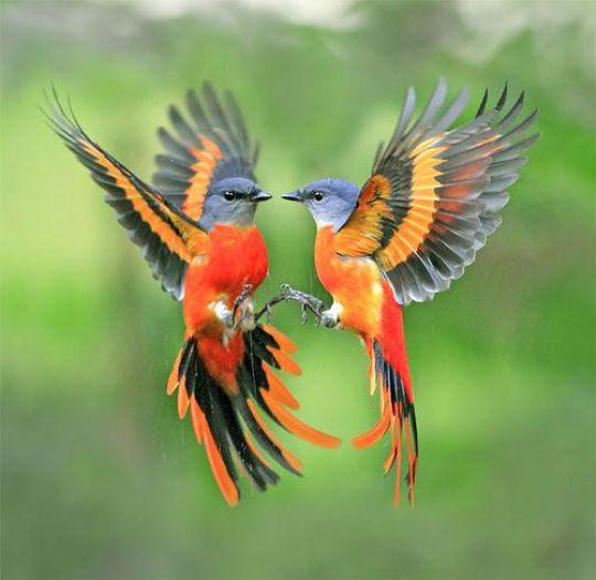 Le colibri une dernièrefois…